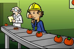 番茄挑拣工